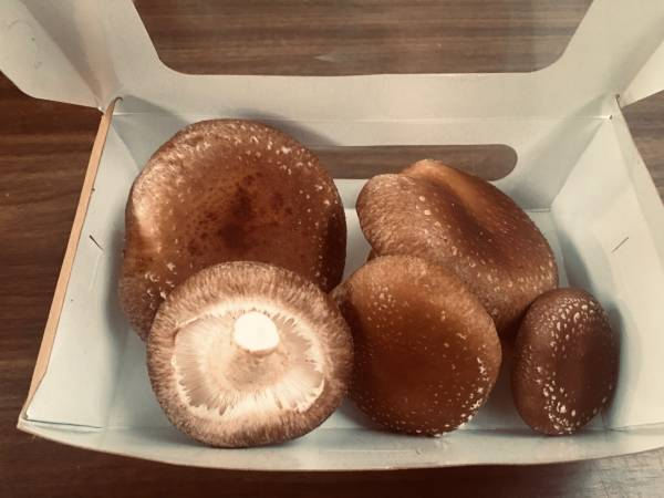 Fresh Shiitake for sale online or markets