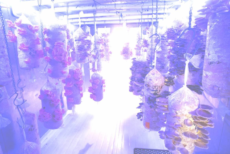 Mushroom_45-bright-2.jpg