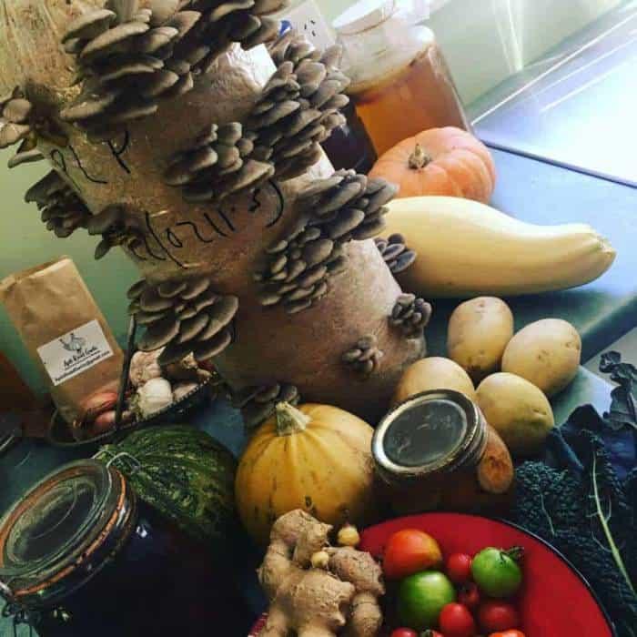 grow your own mushrooms (Oyster Mushroom grow kit)
